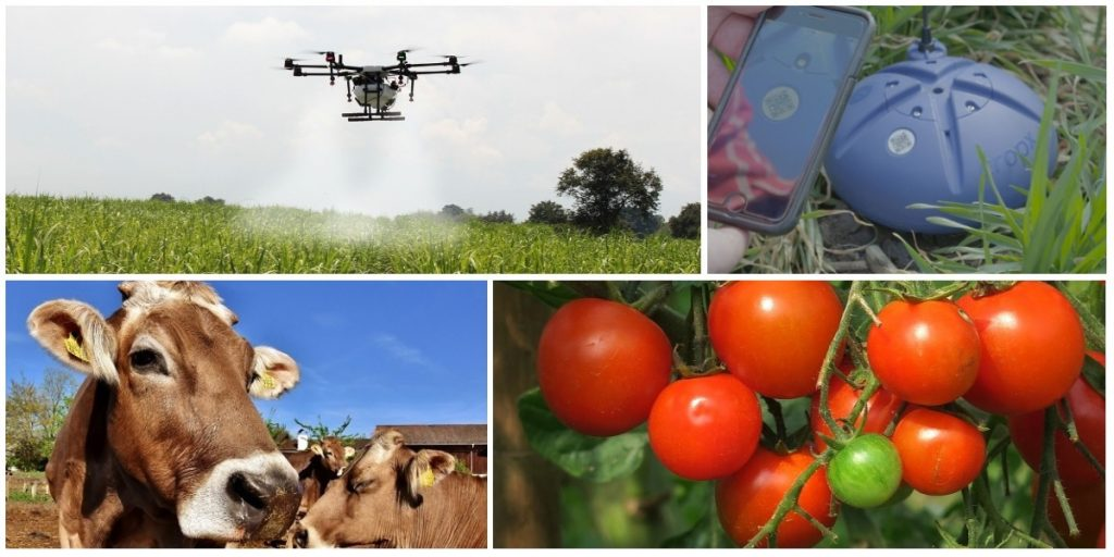 Agriculture Food Collage, Pixabay