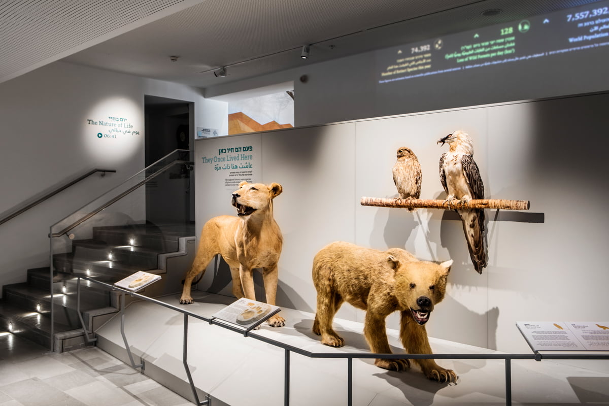 The Steinhardt Museum of Natural History. Photo by Itai Benit