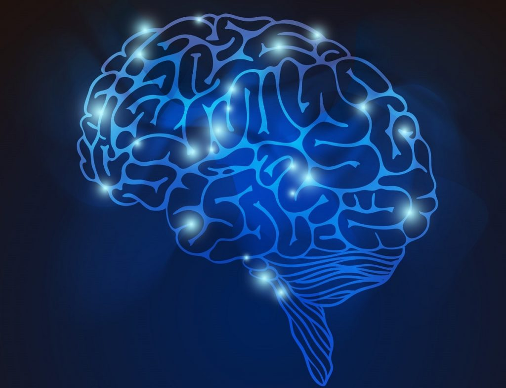 A graphic of the brain. Designed by Freepik
