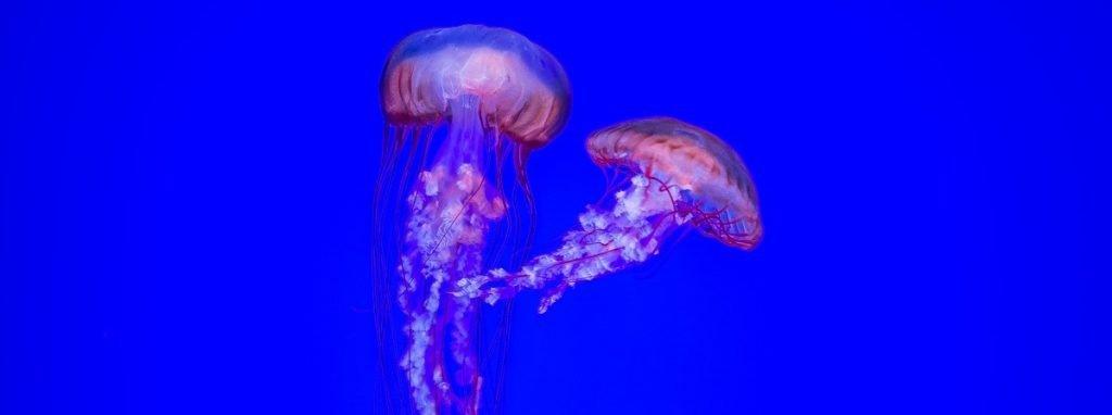 Pink Jellyfish. Photo by Filip Mroz on Unsplash