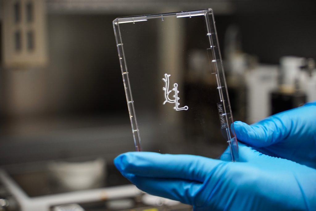 Tissue printed at the Technion's new 3D tissue printing center. Photo via the Technion's spokesperson's office.