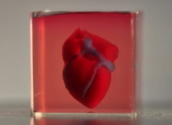 A 3D printed, small-scaled human heart engineered from the patient's own materials and cells. Photo via TAU