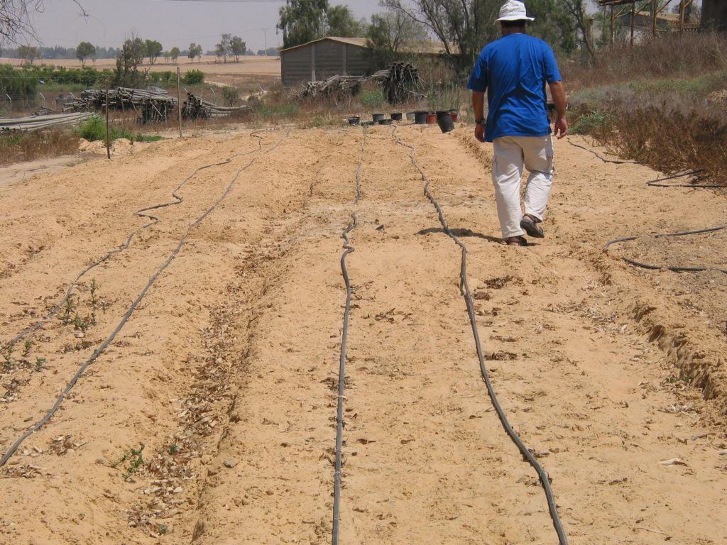 The experimental field for desert truffles by Israeli researchers. Courtesy
