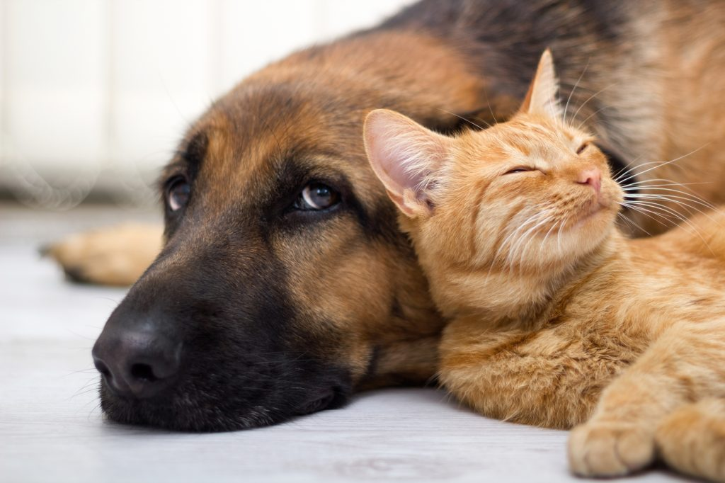 A dog and a cat. Photo by Deposit Photos