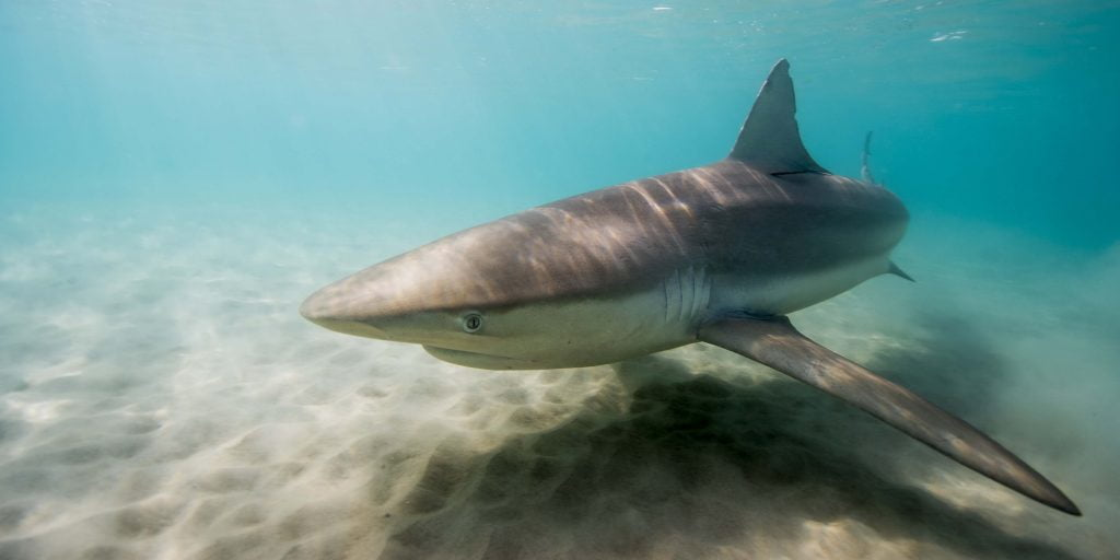 How Israel Became An Unlikely Shark Research Hub, According