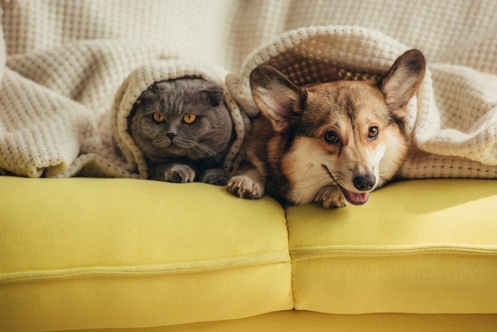 Furry friends: A cat and dog under a blanket. Deposit Photos