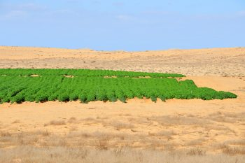 Desert farming in the Negev, Israel. Illustrative. Deposit Photos