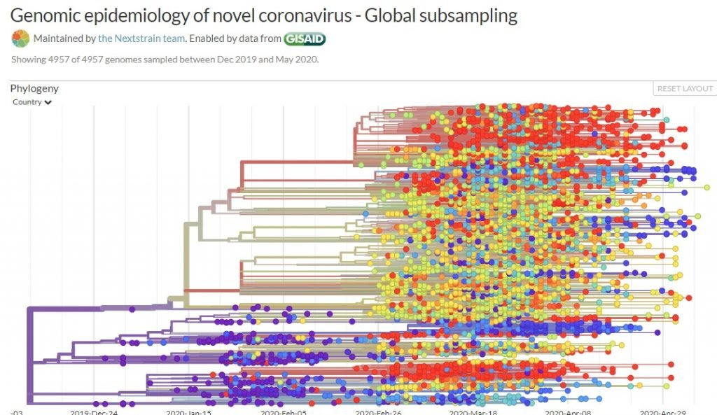 A screenshot from NextStrain showing the genomic epidemiology of the novel coronavirus, SARS CoV-2 by date.
