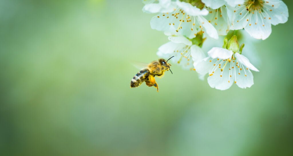 7 Israeli Bee Tech Firms Protecting Bee Populations, Global Agriculture | Environment News